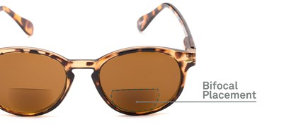 Detail of The Drama Bifocal Reading Sunglasses in Dark Tortoise with Amber