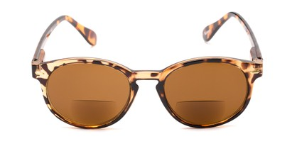 Front of The Drama Bifocal Reading Sunglasses in Dark Tortoise with Amber